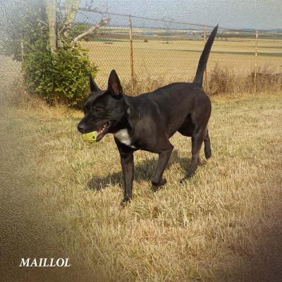 Maillol 2017 publié