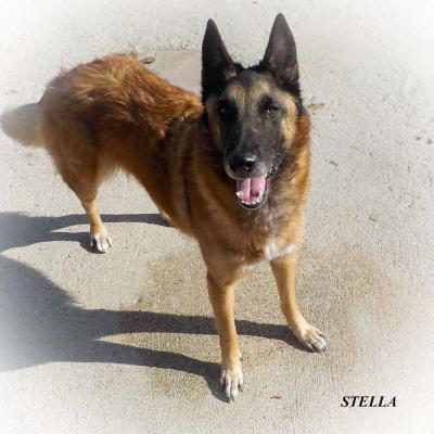 Stella publié