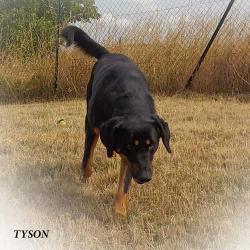 Tyson 2014 publié
